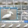 Wyszukiwanie obrazkowe zdjęcia